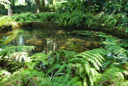 I like it laghetti in giardino for Laghetti ornamentali da giardino